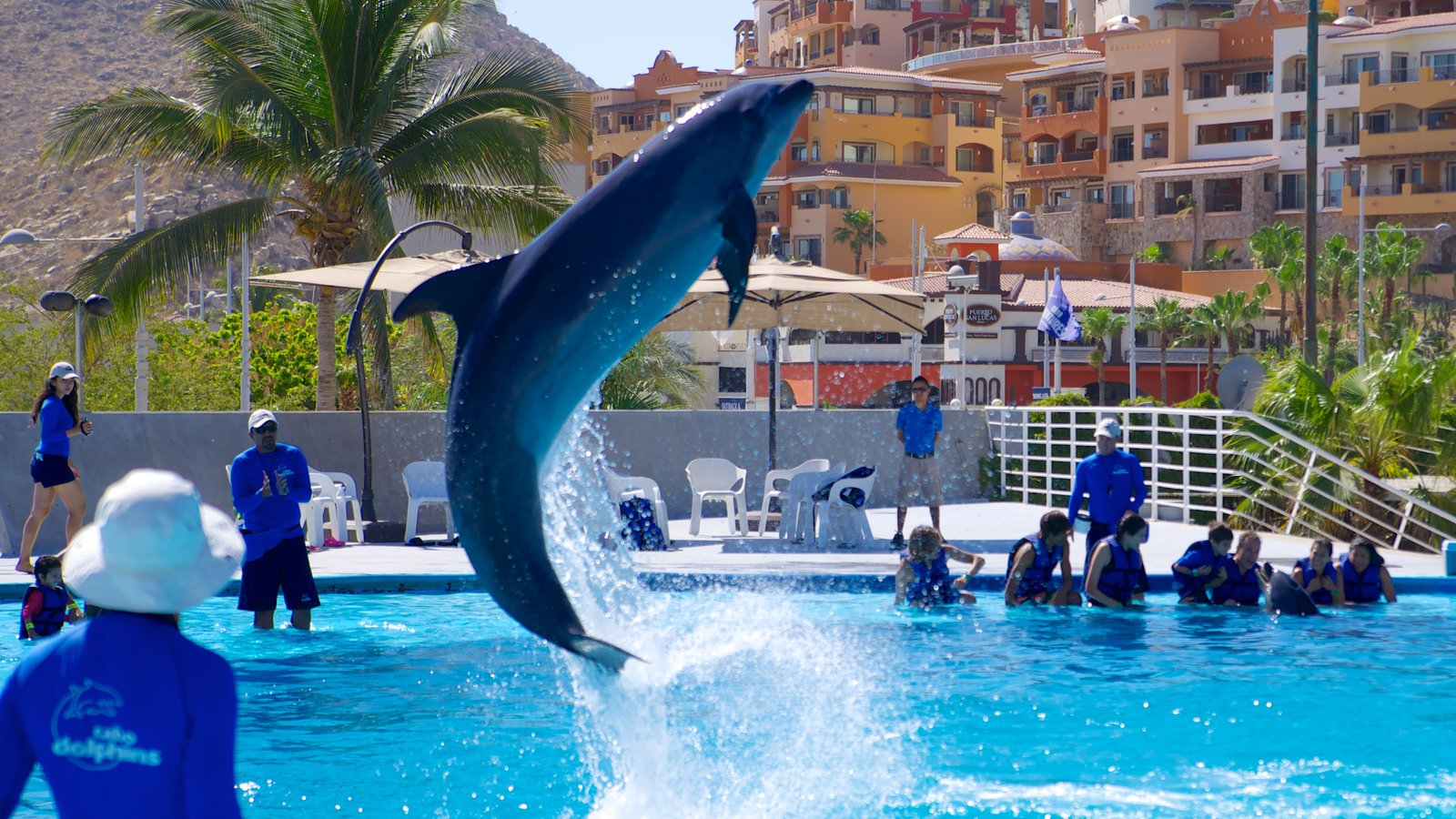 best resort in cabo to go with family u0026 friends this blog is
